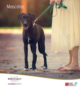 mascotasMERCURE_2014
