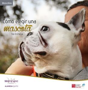 MASCOTA_1_MERCURE_2014