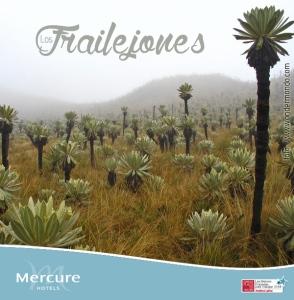 FRAILE_MERCURE_2015