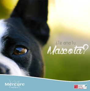 MASCOTA_MERCURE_2015
