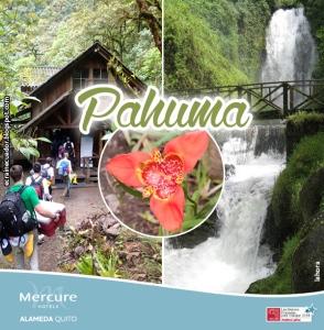 PAHUMA_MERCURE_2015