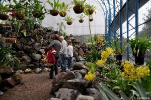 navidad-en-el-jardin-botanico-20131212075146-54bac116d8c421aabd9badf1fb372659