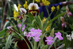 visita-virtual-al-jardin-botanico--ahora-en-ingles-20130413072352-dbd5235eb99709c486ee81c3bba6f45f